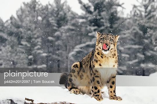 p442m2012097 von Tom Soucek