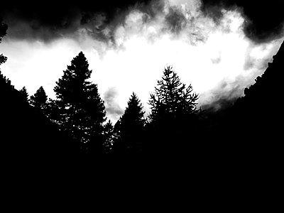 Waldrand in der Abenddämmerung - p1279m1466953 von Ulrike Piringer