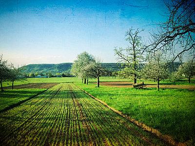 Germany, Baden-Wuerttemberg, Tuebingen, flowering apple trees - p300m1009419f by Larissa Veronesi