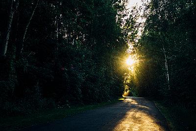 Empty country road through forest at sunset - p300m2004644 von Jana Mänz