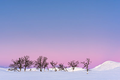 Winter landscape at sunset - p312m1121463f by Mikael Svensson