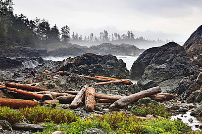 Driftwood Along The Wild Pacific Trail; Ucluelet Vancouver Island British Columbia Canada - p442m839465 by Ken Gillespie