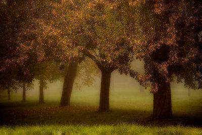 Obstbäume im Herbstnebel - p647m1113093 von Tine Butter