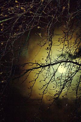Full moon - p739m952877 by Baertels