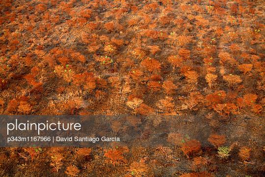 p343m1167966 von David Santiago Garcia