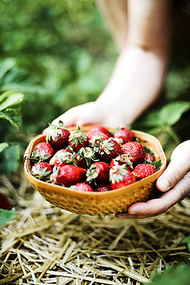 Closeup of a woman‰Ûªs hands holding fresh strawberries. - p1166m2094543 by Cavan Images