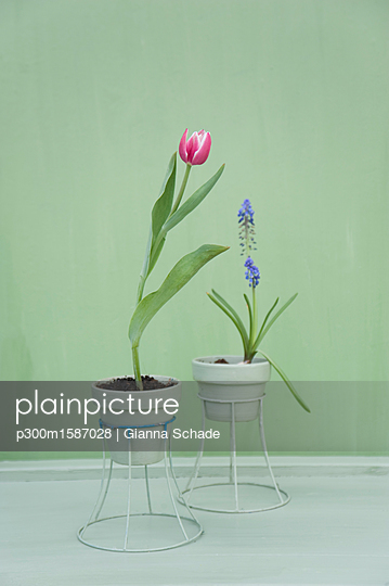 Flower decoration, upcycling of lampshade as flowerpot - p300m1587028 von Gianna Schade