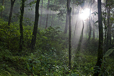 mystical forest - p534m2122009 by Susanna Ferran Vila