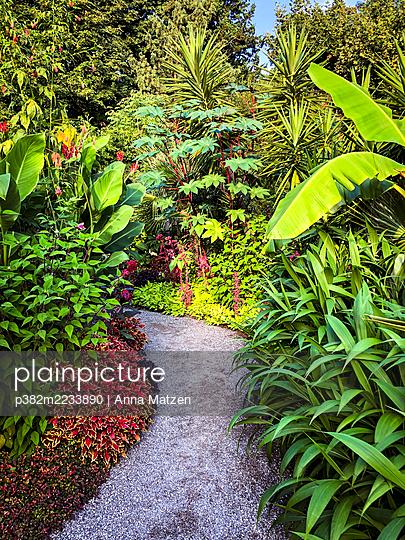 Tropische Pflanzen auf der Insel Mainau - p382m2233890 von Anna Matzen