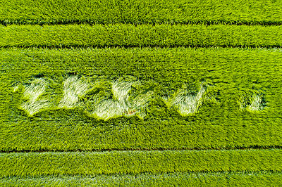 Aerial view of grain field - p300m2004349 von Stefan Schurr
