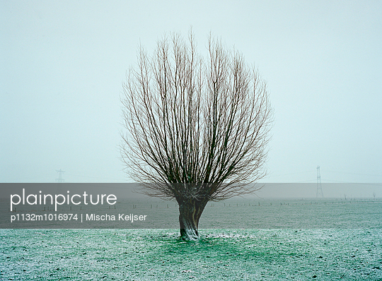 Weide im Winter - p1132m1016974 von Mischa Keijser