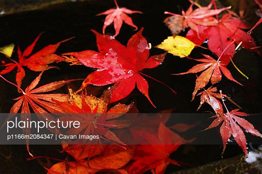 p1166m2084347 von Cavan Images