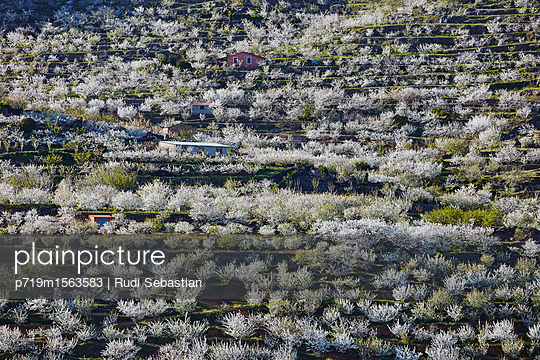 Cherry blossom in Jerte valley - p719m1563583 by Rudi Sebastian
