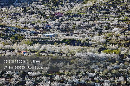 Cherry blossom in Jerte valley - p719m1563583 by Rudi Sebastian