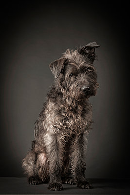 Dog - p403m890153 by Helge Sauber