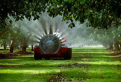 Agriculture - Chemical application, fan jet sprayer in a walnut orchard / Tulare County, California, USA. - p442m961311 by Dave Thurber