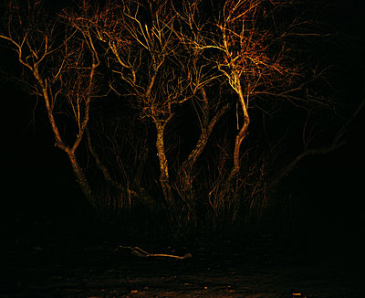 Trees in the night - p453m2160972 by Mylène Blanc
