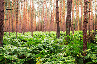 Forest and fern - p8850209 by Oliver Brenneisen