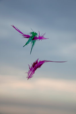 Colourful feathers floating midair - p1385m1441125 by Beatrice Jansen