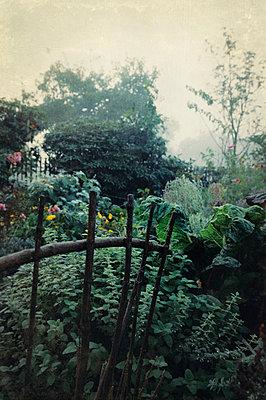 Cottage garden - p470m966292 by Ingrid Michel