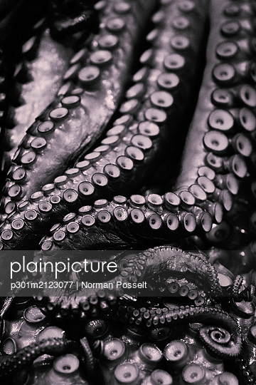 Close up octopus tentacles - p301m2123077 by Norman Posselt