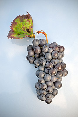 Grapes - p885m1087447 by Oliver Brenneisen