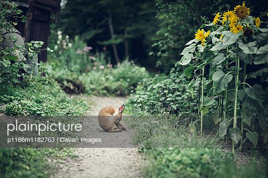 p1166m1182763 von Cavan Images
