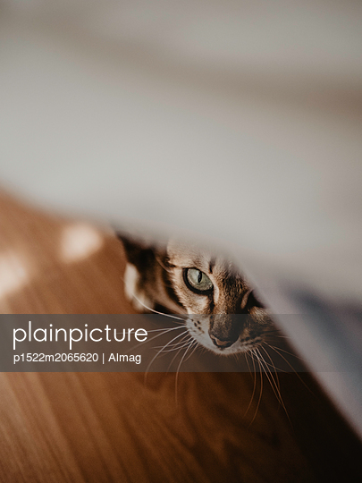 Cat peeking out from under the bed - p1522m2065620 by Almag