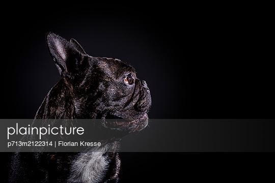 p713m2122314 by Florian Kresse