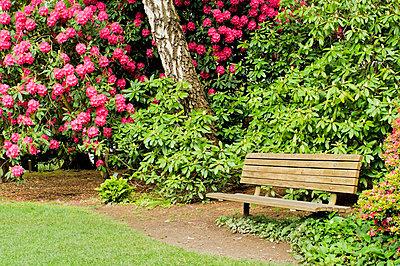 p4429387f von Design Pics