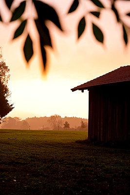 Morning light in autumn - p533m1104443 by Böhm Monika