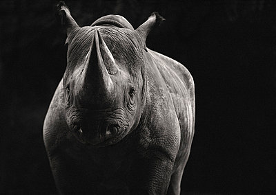 Black Rhinoceros - p6940887 by James Gritz