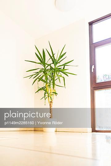 Plant - p1149m2285160 by Yvonne Röder