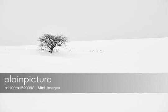 p1100m1520092 von Mint Images