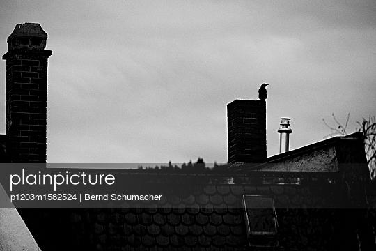 Krähe auf einem Schornstein - p1203m1582524 von Bernd Schumacher