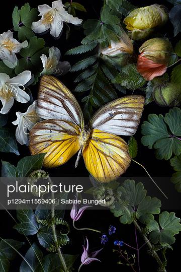 p1294m1559406 by Sabine Bungert