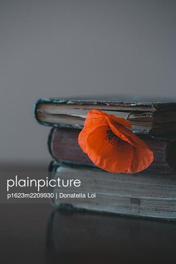 Poppy and books - p1623m2209930 by Donatella Loi