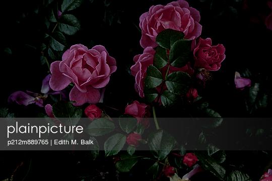 Rosen - p212m889765 von Edith M. Balk