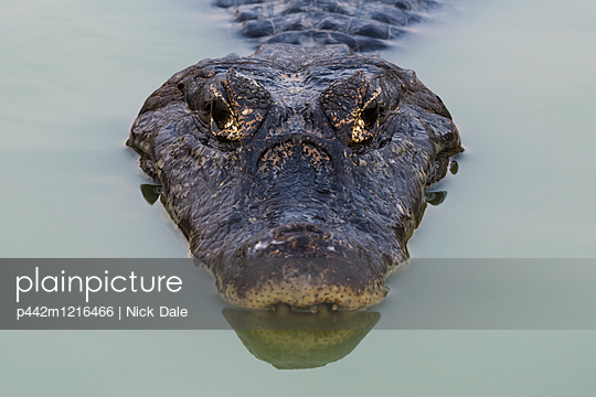 p442m1216466 von Nick Dale