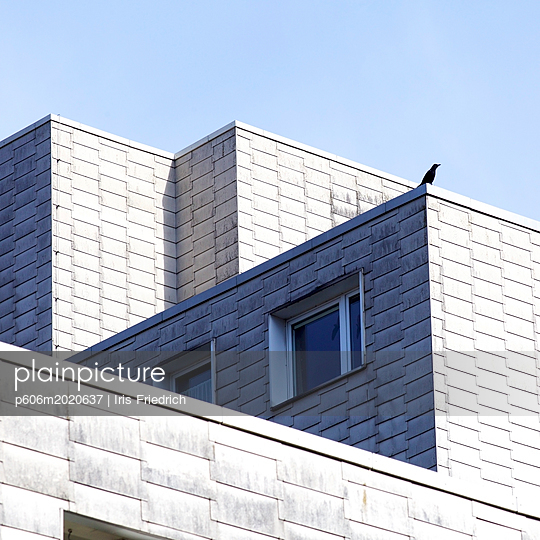 Vogel sitzt auf Flachdach eines Wohnblocks - p606m2020637 von Iris Friedrich