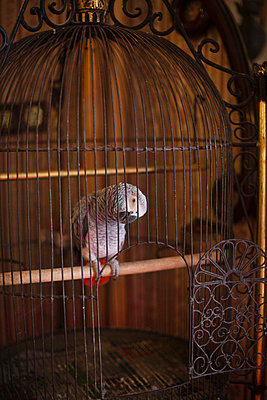 Bird in open cage - p8280533 by souslesarbres