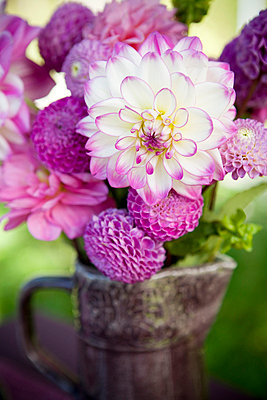 Bouquet Of Purple And White Dahlias In A Vase - p8473440 by Thomas Carlgren