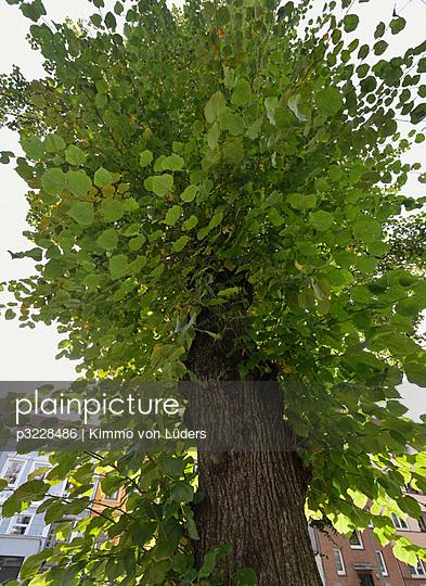 Baum - p3228486 von Kimmo von Lüders