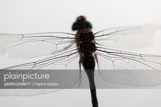 Dragonfly - p628m2238077 by Franco Cozzo