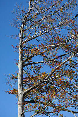 Tree in wind - p445m731833 by Marie Docher