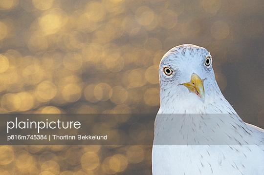 p816m745384 von Thorfinn Bekkelund