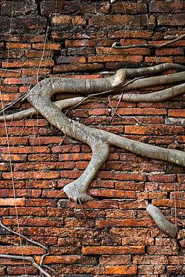 Wurzeln in einer Backsteinmauer - p1032m1220655 von Fuercho