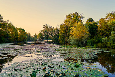 Lake with water lilies at dawn - p1312m2269985 by Axel Killian