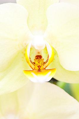 Orchidee - p958m2158165 von KL23
