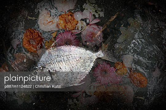 Der Fisch - p887m1124822 von Christian Kuhn